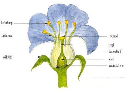 Onderdelen van de bloem